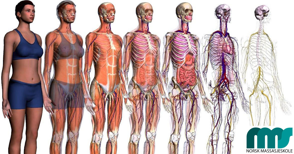 Anatomi-Fysiologi