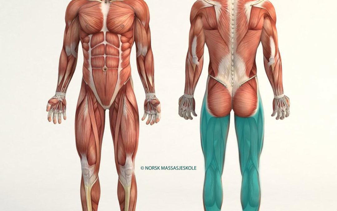 Anatomisk-Posisjon-Bakside-Ben
