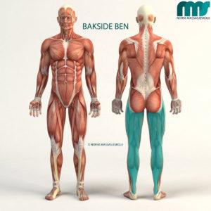 WEBINAR - Nivå 1 - Bakside ben