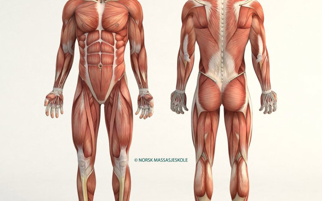 Anatomisk-Posisjon-Nakke