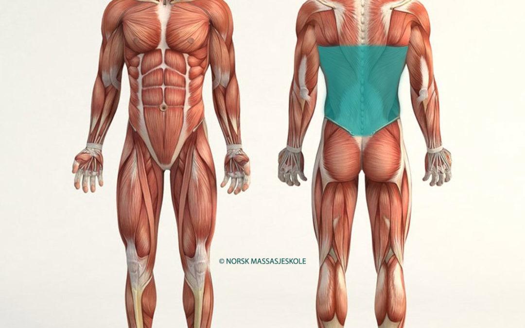 Anatomisk-Posisjon-Nedre-Rygg