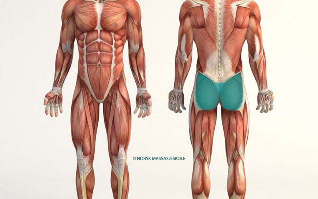 Anatomisk-Posisjon-Sete